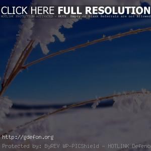 Снег, лед, ветка, зима