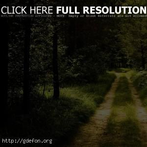 Дорога, лес, тропа