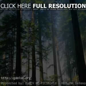 Лес, деревья, стволы