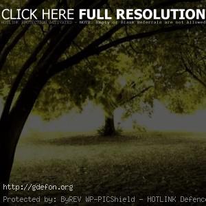 осень, свет, деревья