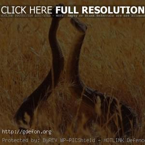 Танец змей