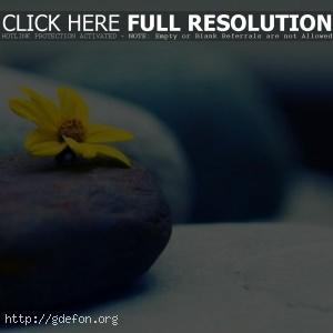 Большие — желтый цветок на камне