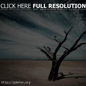 пустыня, дерево, тень, облака