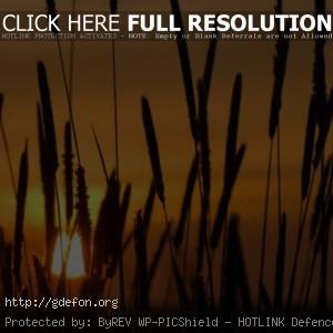 Камиши, закат, солнце