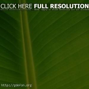Зеленый лист растения