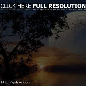 Восход, море, дерево, луна