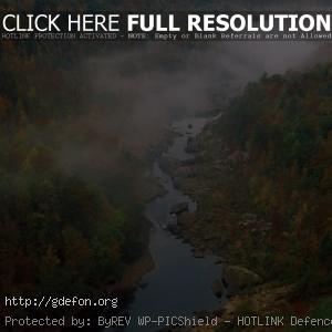 Лес, деревья, река, туман