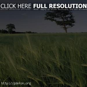 Поле, трава, небо, дерево