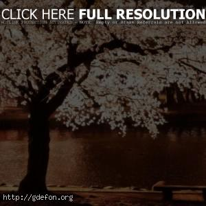 Цветущее дерево на берегу реки