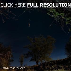 Деревья, отражение, трава