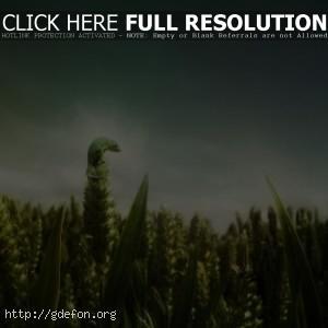 Хамелеон на плантации