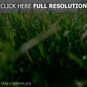 Трава, газон, зелень