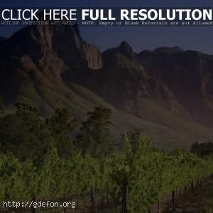 Африка, горы, зелень