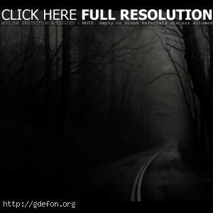 Дорога, лес, деревья, черно-белое
