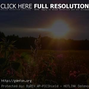 Закат, небо, солнце, поле, цветы