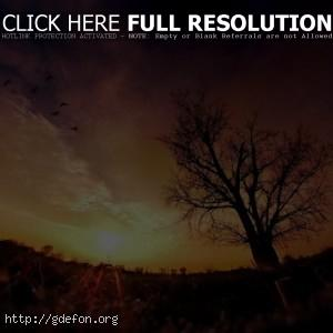 дерево, закат, солнце