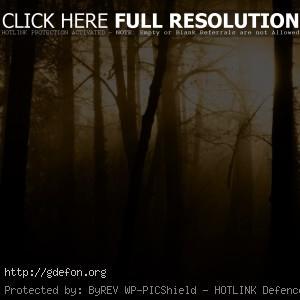 Деревья, туман, сепия, мрак