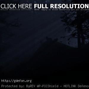 Лес, волки, свет, ночь