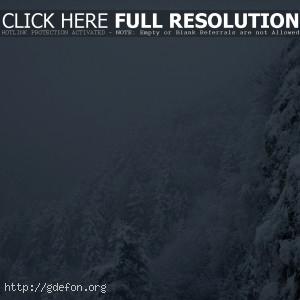 Снег, зима, метель, лес