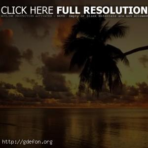 Пальма и закат