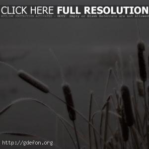 Камыш, иней, болото, туман