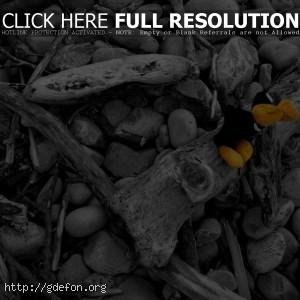 Камни, ветки, игрушка, цвет, черно-белае