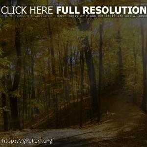Огайо, солнце, осень