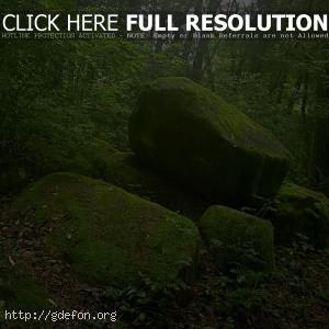 Камни покрытые мхом