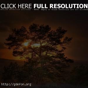 Дерево, солнце, закат