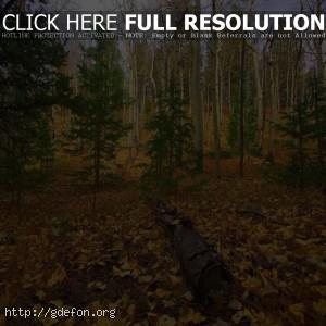 Лес, осень, деревья