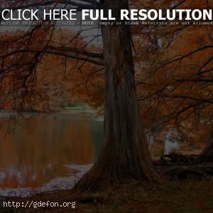 Дерево, осень, озеро