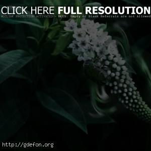 Жук, листья, цветы