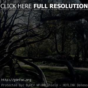 Деревья, паутина, паук, тёмные