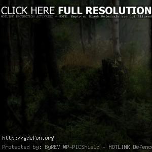 Лес, трава, свет