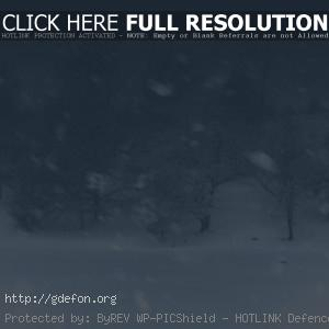 Метель, снег, зима, лес, деревья