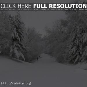 Зима, деревья, дорога, снег