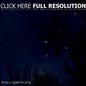 капля, ветка, ночь