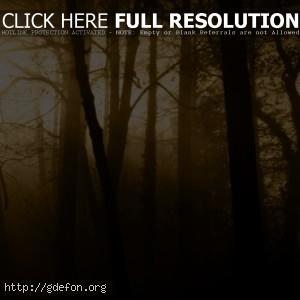 Лес, туман, деревья, лучи, свет