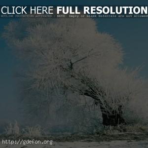 Дерево, снег, иней