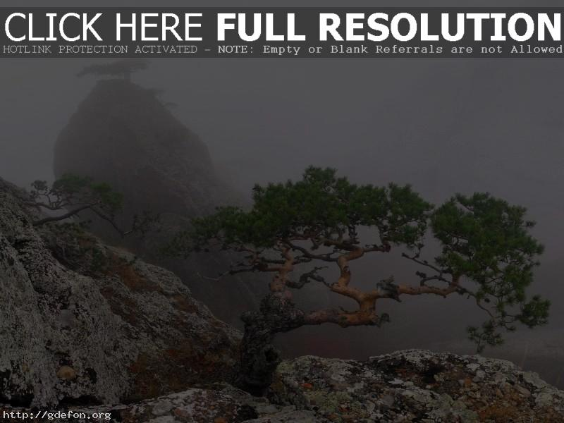 Обои скала, туман, деревья фото картики заставки