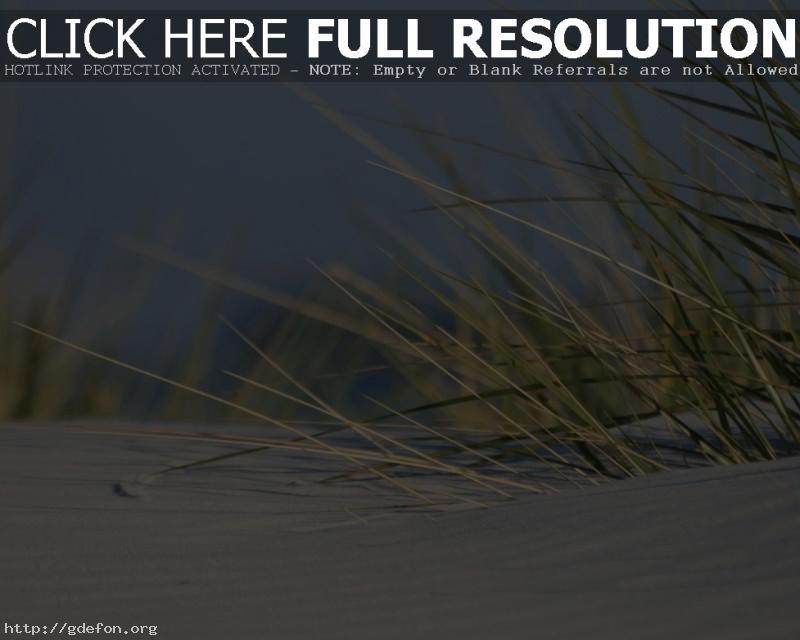 Обои Песок, трава фото картики заставки