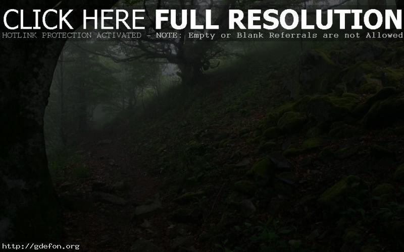 Обои камни, тропа, деревья, туман фото картики заставки