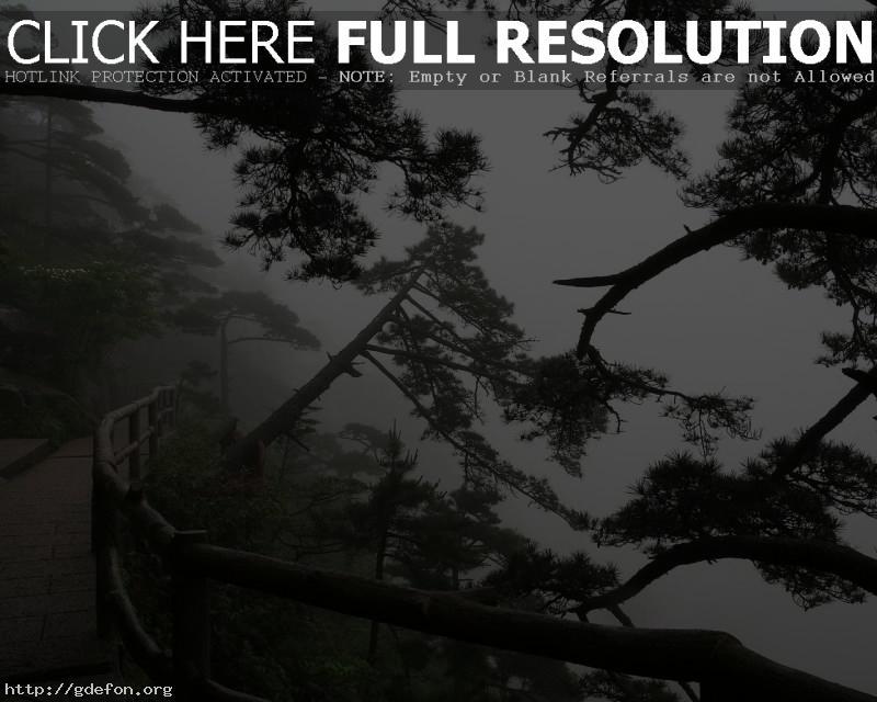Обои Деревья, тропа, туман фото картики заставки