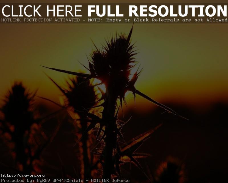 Обои закат, трава, бурьян фото картики заставки