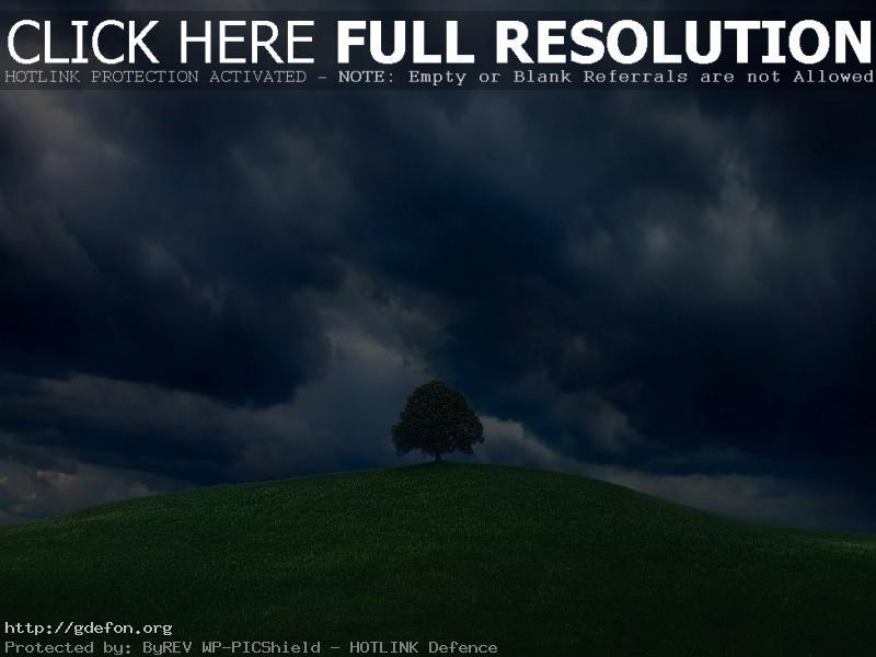 Обои Одинокое дерево на холме фото картики заставки