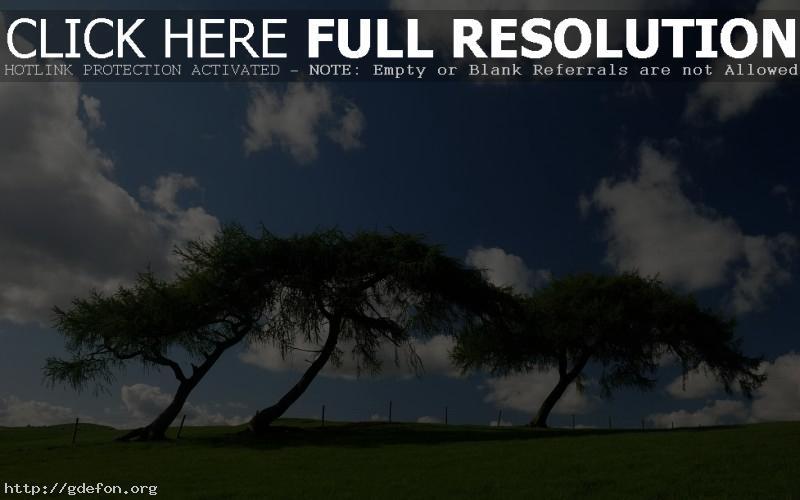 Обои Небо, зелень, деревья фото картики заставки