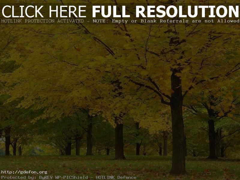 Обои Осень, деревья, листья, желтое фото картики заставки