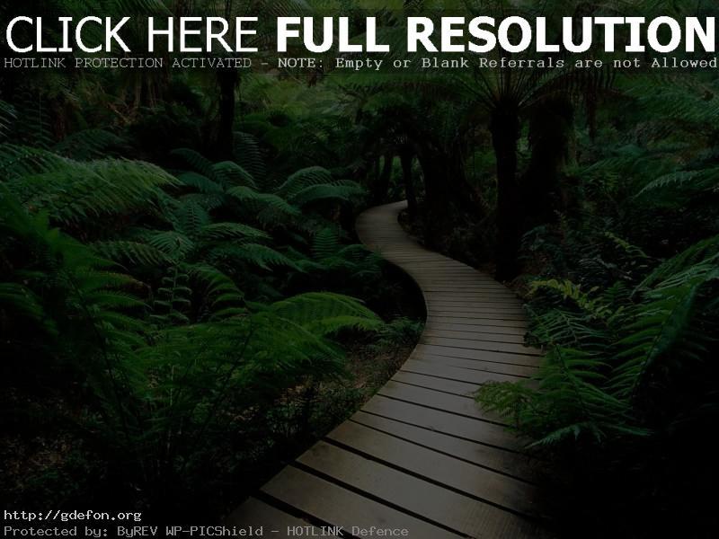 Обои Тропа, папоротники, растения фото картики заставки