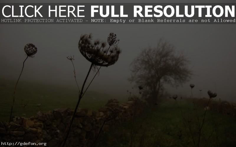 Обои Трава, забор, дерево, туман фото картики заставки