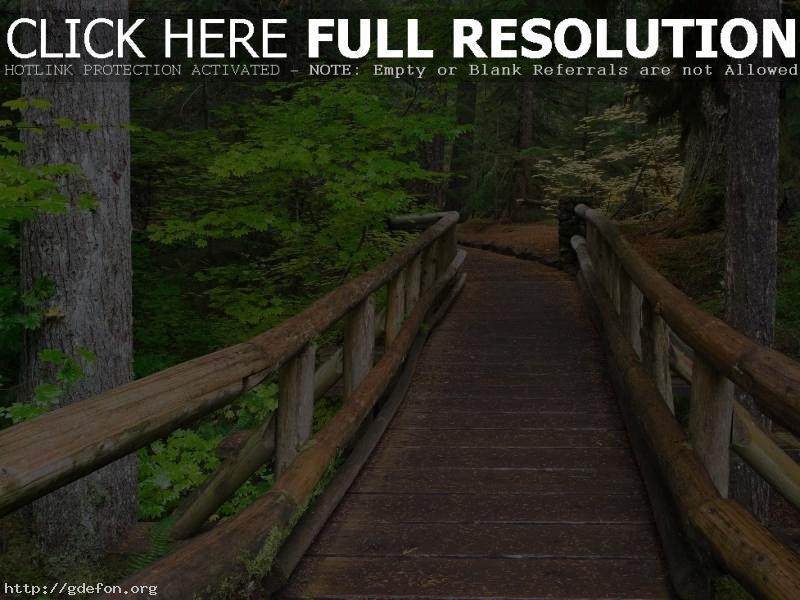 Обои Мост, лес, деревья, тропа фото картики заставки